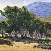 Eucalyptus Grove Catalina  Art Print