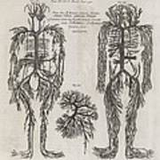 Evelyn Table Blood Vessels, 17th Century Art Print