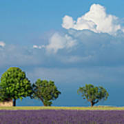 Evening In Provence Art Print