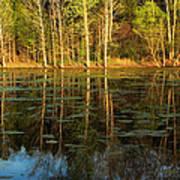 Evening Light On A Missouri Pond I Art Print
