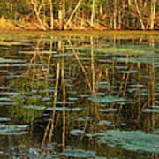 Evening Light On Missouri Pond 2 Art Print