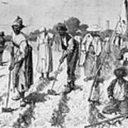 Ex-slaves, Working In A Gang Art Print by Everett