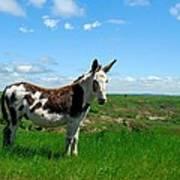 Exotic Mule In Montana Art Print