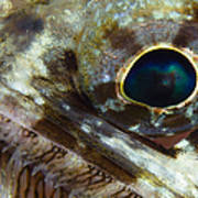Extreme Close-up Of A Lizardfish Art Print