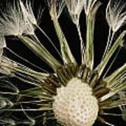 Extreme Close-up Of The Seedhead Art Print