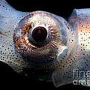 Eye Flash Squid Art Print