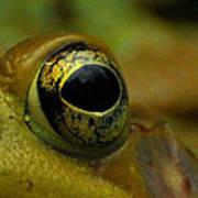 Eye Of Frog Art Print