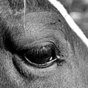 Eye Of The Horse Black And White Art Print