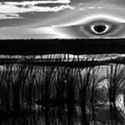 Eye Over Everglades Art Print