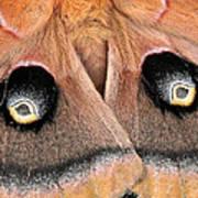 Eyes Of Deception Art Print by Peg Urban