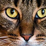 Face Framed Feline Print by Art Dingo