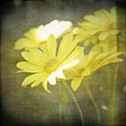 Faded Yellow Art Print