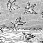 Falconry, 14th Century Art Print