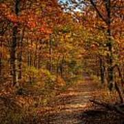 Fall At Center Point Trailhead Art Print