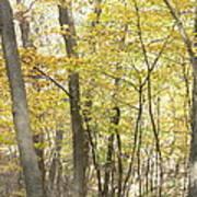 Fall Beginning  Art Print