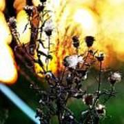 Fall Blooms Art Print