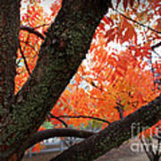 Fall Branches Art Print