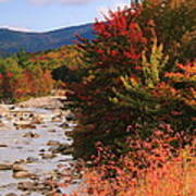 Fall Color In The White Mountains Art Print