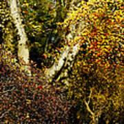 Fall Color Wall Art Landscape Art Print