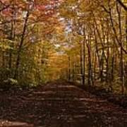 Fall Color Road Art Print