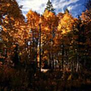 Fall Colors Taylor Creek. Art Print