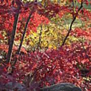 Fall Comes To New England Art Print