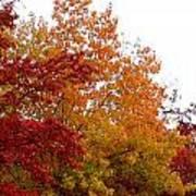 Fall Filled Sky Art Print