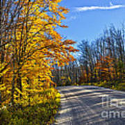 Fall Forest Road Print by Elena Elisseeva