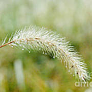 Fall Foxtail Art Print