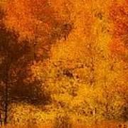 Fall Glory Art Print