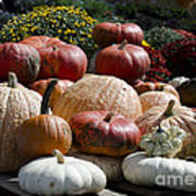 Fall Harvest Colorful Gourds 7965 Art Print