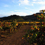 Fall In A Sonoma Vineyard Art Print