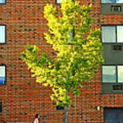 Fall In Rochester Art Print