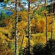 Fall In The Sierras Art Print by Helen Carson