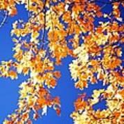 Fall Is In The Air Art Print