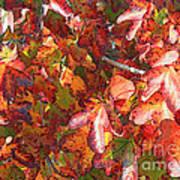Fall Leaves - Digital Art Art Print