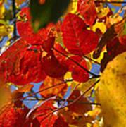 Fall Leaves Flp Art Print