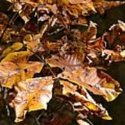 Fall Leaves Part Five Art Print
