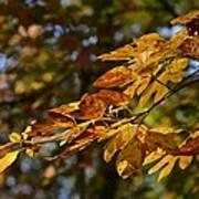 Fall Leaves Part One Art Print