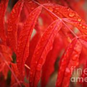Fall Leaves Red 3 Art Print