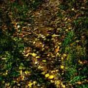 Fall Lined Trail Art Print