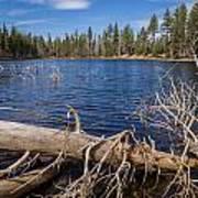 Fall Logs On Reflection Lake Art Print