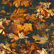 Fall Maple Leaves On Water Art Print