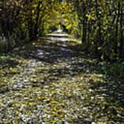 Fall On Macomb Orchard Trail Art Print