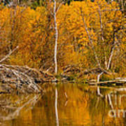 Fall On Taylor Creek Art Print