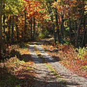 Fall On The Wyrick Trail Art Print