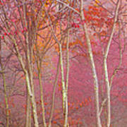 Fall Pastels Art Print