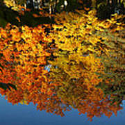 Fall Reflectionsin Michigan Art Print