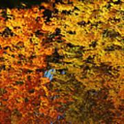 Fall Textures In Water Art Print by LeeAnn McLaneGoetz McLaneGoetzStudioLLCcom