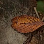 Fall Textures Art Print